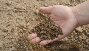Как да изберем правилно пропорцията на НПК или смесените торове