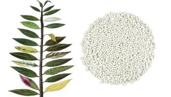 Симптоми при недостиг на торове по листата на растенията