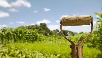 Как правилно да наторяваме посевите си?