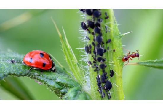 Неотровни методи за борба с вредителите използвани в Бран Инсект ЕООД