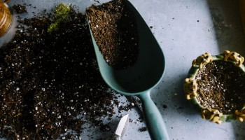 Видове почви и субстрати за цветя, декоративна растителност и разсади