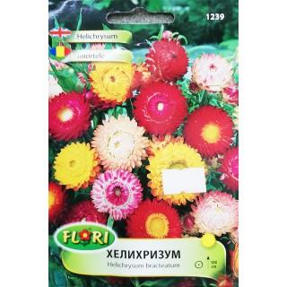 Цветя Хелихрозум 1239 | Макадамия 05
