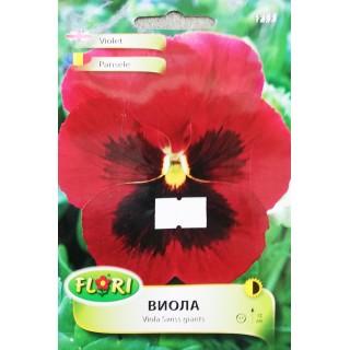 Цветя Виола 1253 | Макадамия 05