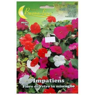 Семена Импасианс | Макадамия 05