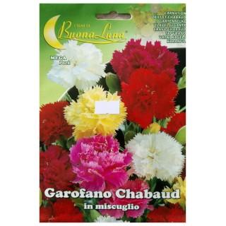 Семена Градински каранфил   Макадамия 05
