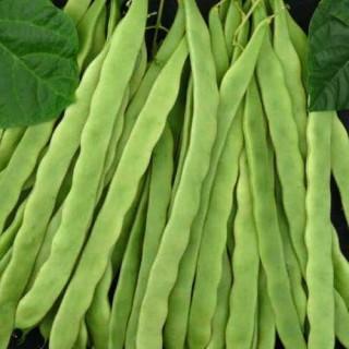 Семена зелен фасул Алгарве F1 | Макадамия 05