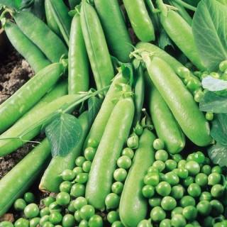 Семена Грах Авола | Макадамия 05