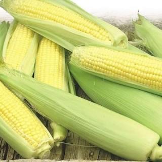 Семена царевица Ерика F1 | Макадамия 05