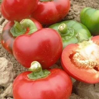 Семена Пипер Гладки камби | Макадамия 05