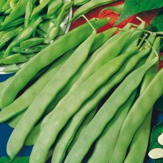 Семена зелен фасул Лимка F1 | Макадамия 05