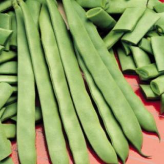 Семена зелен фасул Насау  | Макадамия 05