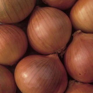 Семена лук Радар F1 | Макадамия 05