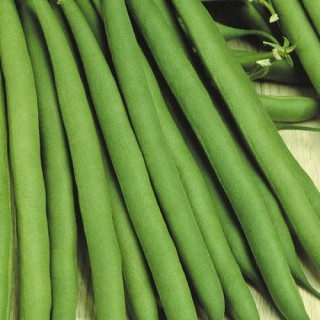 Семена зелен фасул Стенли F1 | Макадамия 05