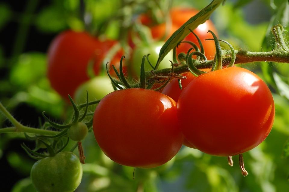 Най-търсени сортови семена домати