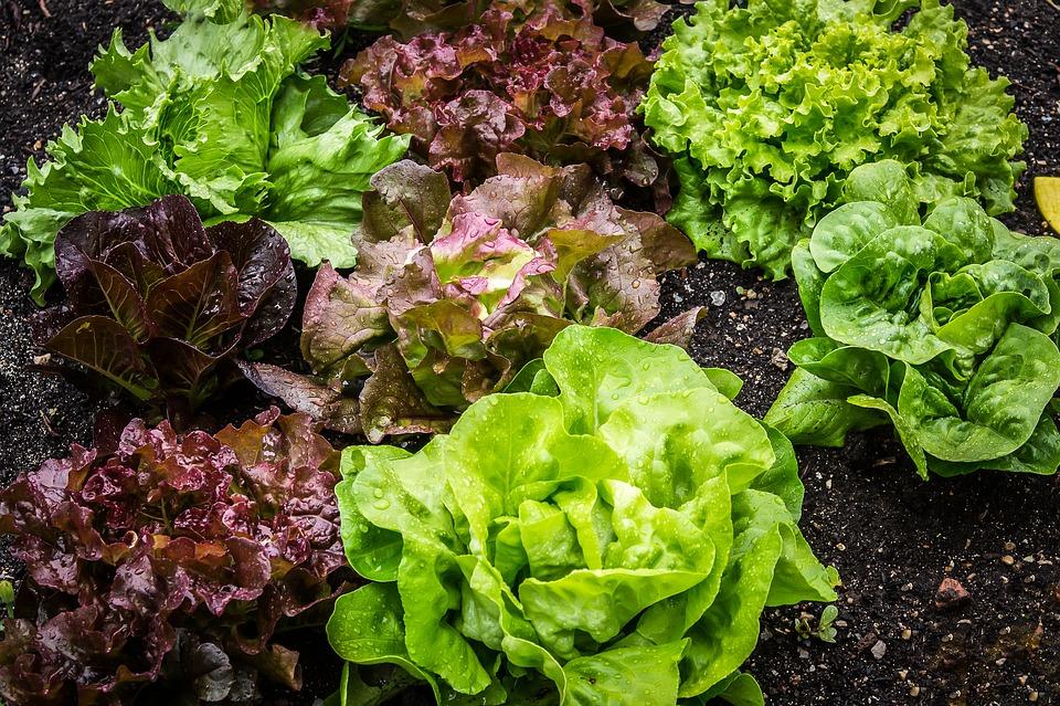 НПК тор за маруля и листни зеленчуци