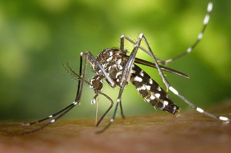 Айкън отрова за комари